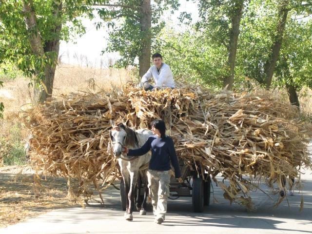 Photo 7 - Giant Haystacks - OLD & NEW EUROPE